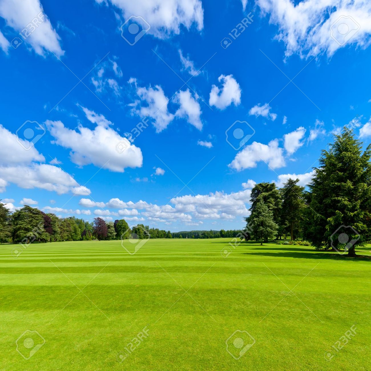 summer landscape with green park lawn and blue sky stock photo