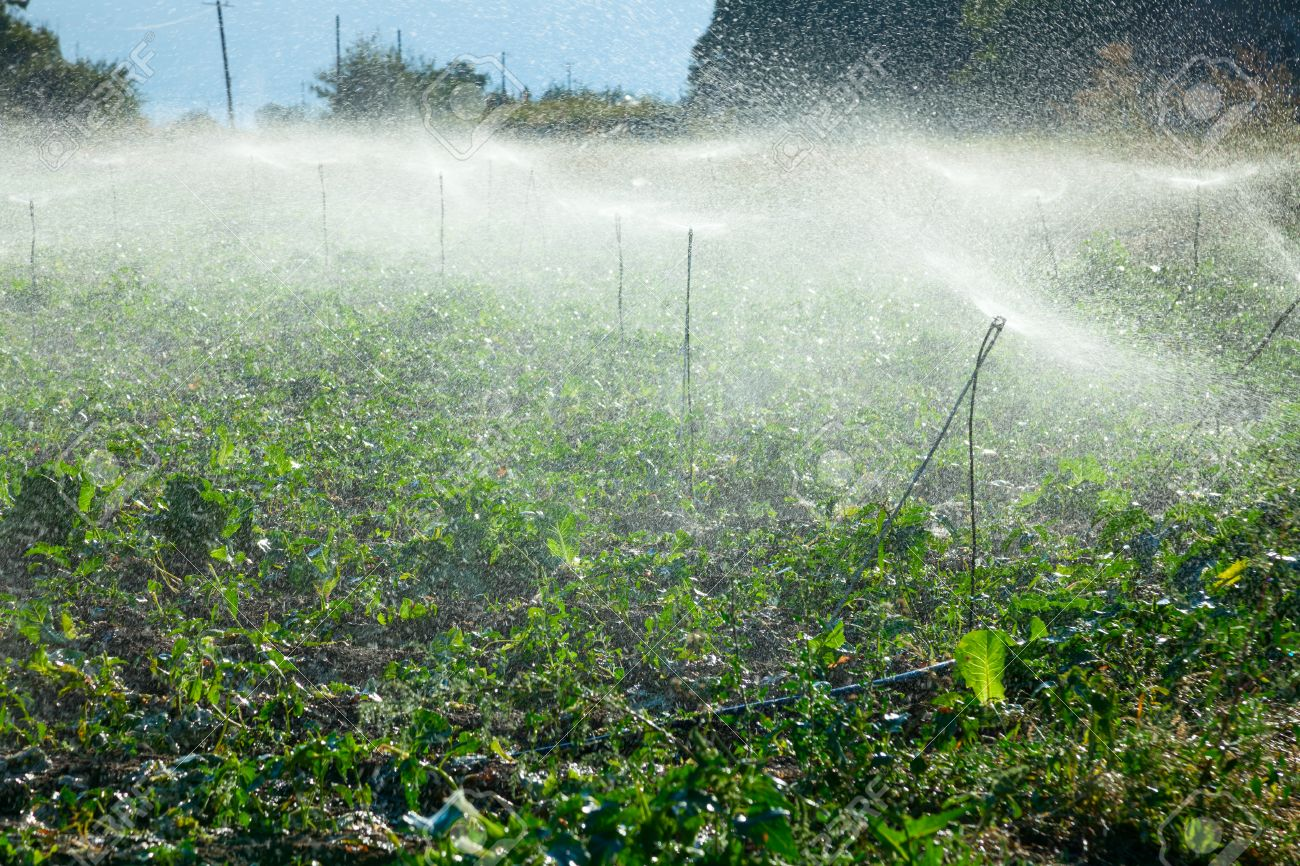 Watering Crops By Sprinkler Irrigation On A Farm Land Stock Photo ...