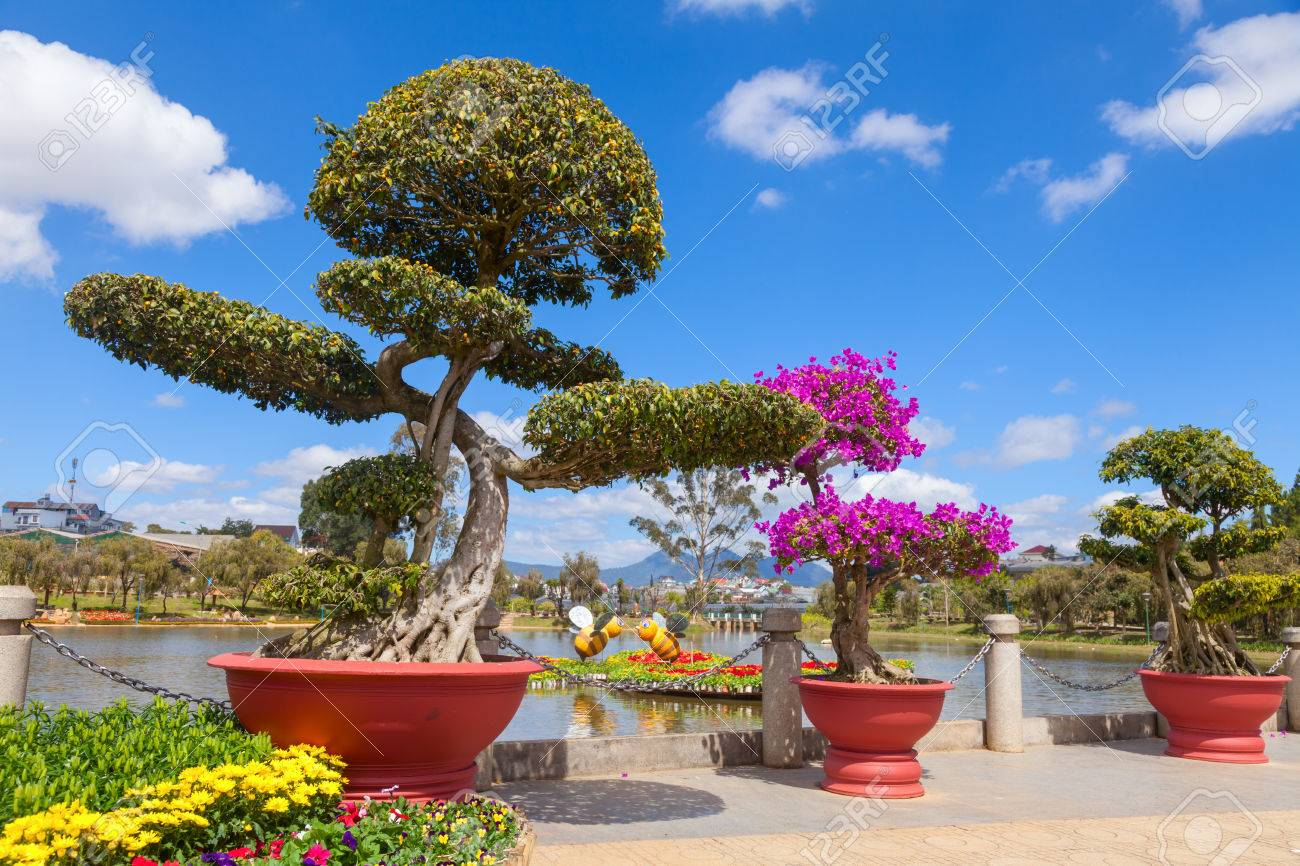 Bonsai Trees At City Flower Garden In Dalat Vietnam Stock Photo Picture And Royalty Free Image Image 37121067