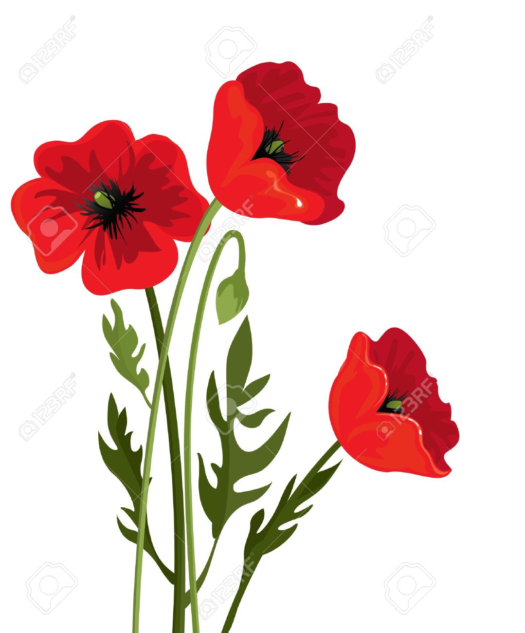 15,795 Poppy Flower Stock Vector Illustration And Royalty Free ...