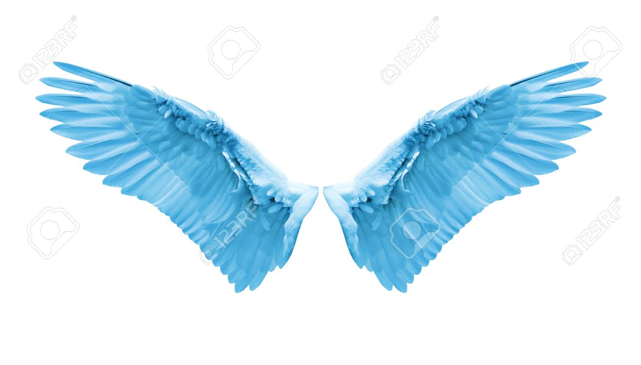 Angel wings natural blue wing plumage with clipping part stock angel wings natural blue wing plumage with clipping part stock photo 78443163 thecheapjerseys Images