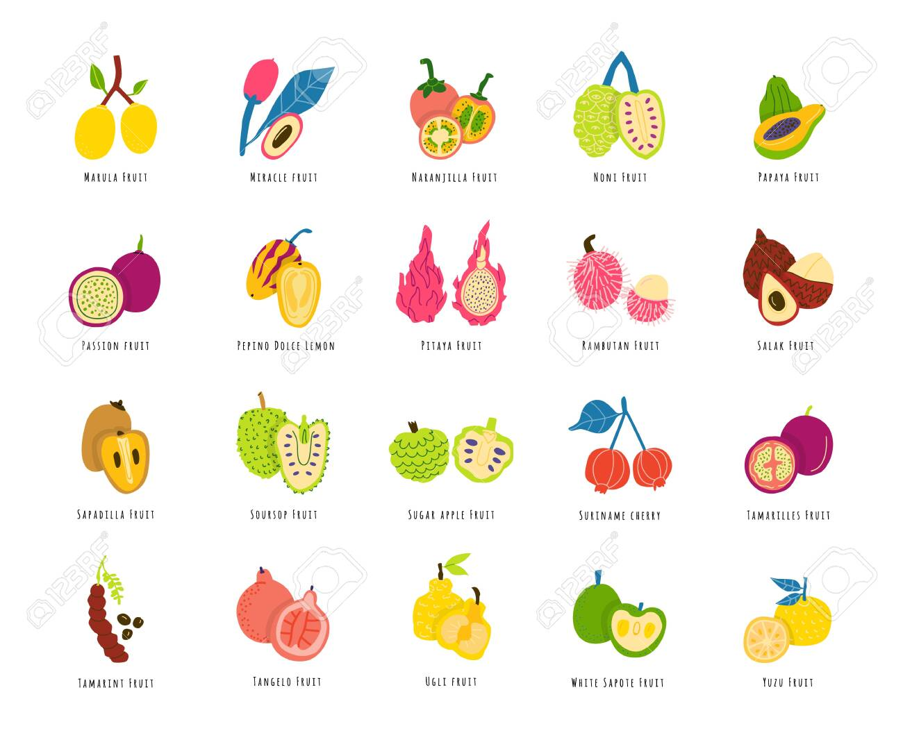 Fruits, berries cartoon illustrations set. Sliced tropical delicacy drawings pack. Exotic juicy food hand drawn cliparts. Chopped healthy summer meal. Fruit salad ingredients with names - 129765396