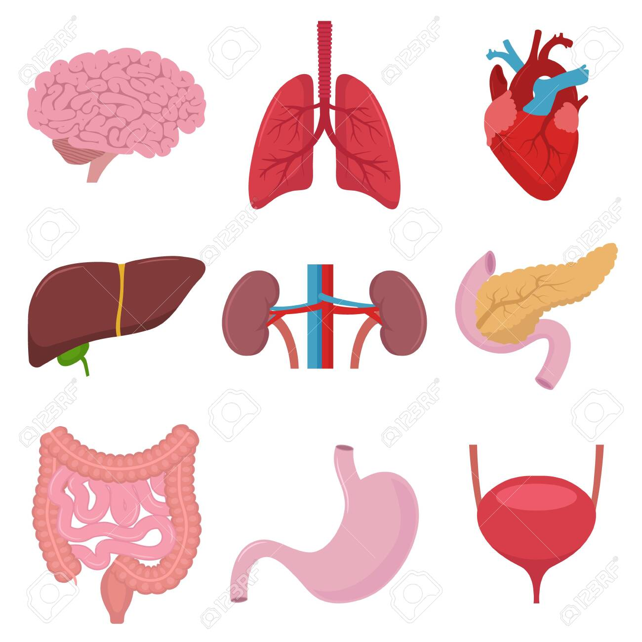 Vector illstration of human organs icon. Flat design. - 139676052