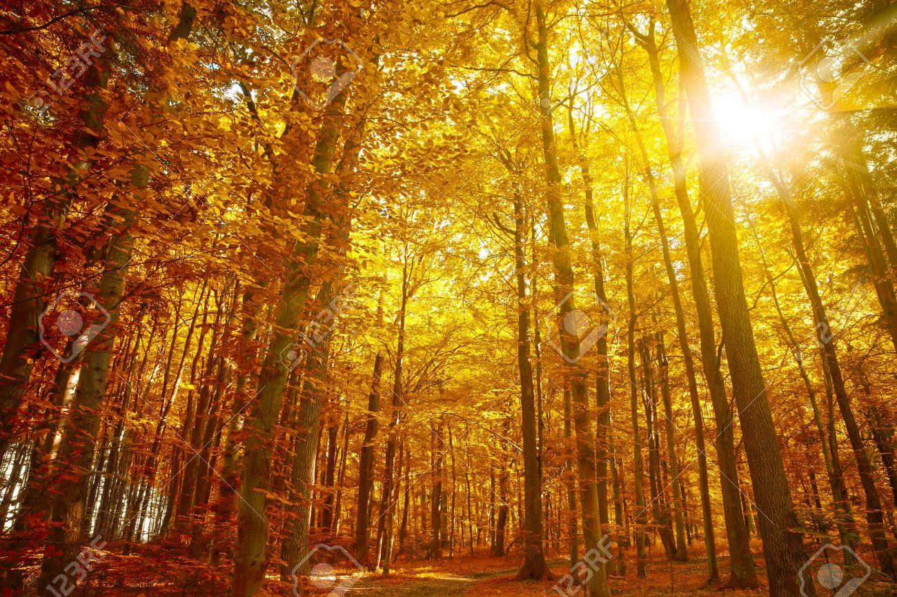Otoño De Oro árboles De Otoño Hojas De Otoño Fotos Retratos