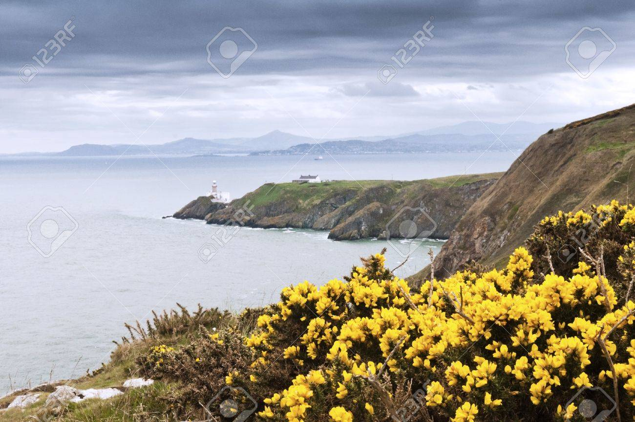 Yellow Flowers And The Lighthouse Howth Ireland Stock Photo