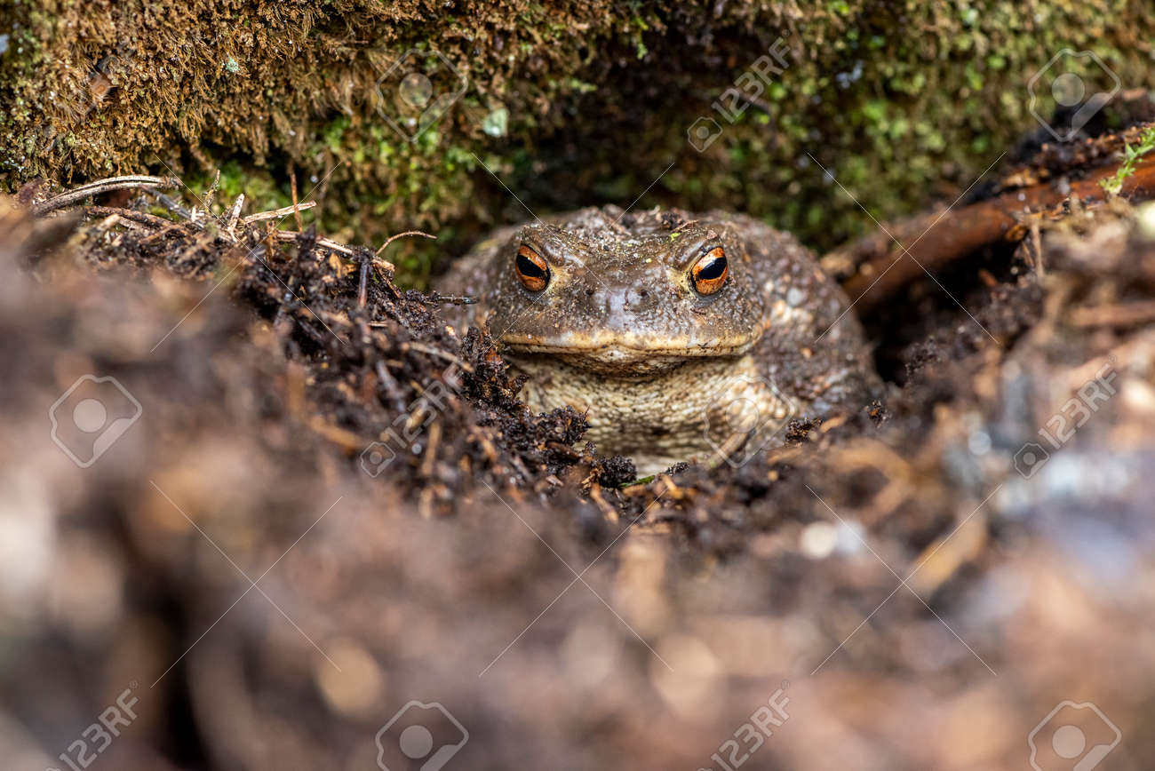 The portrait of a toad in a forest - 165071142