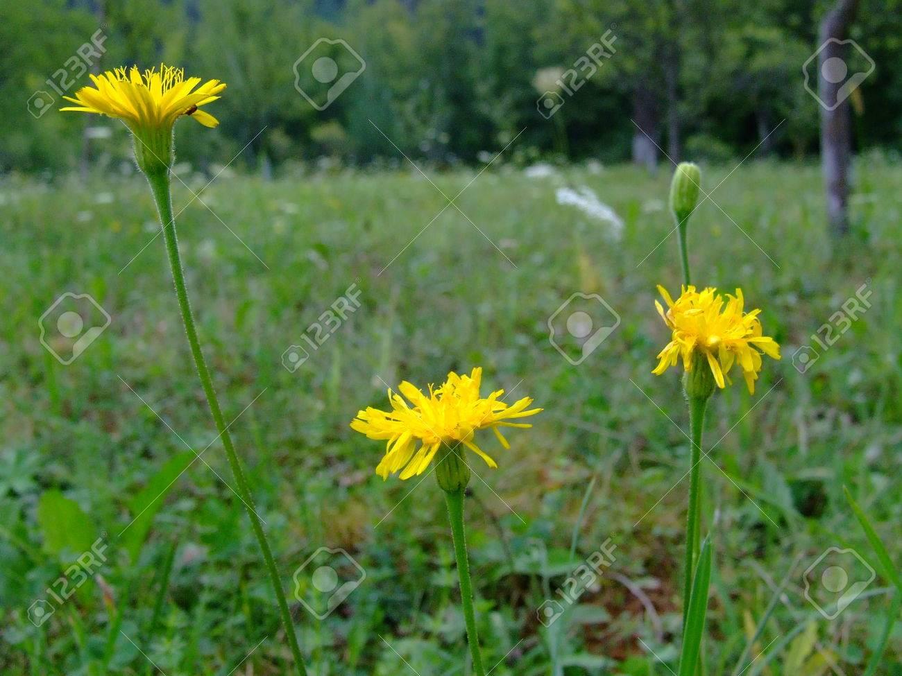 wildflowers Stock Photo - 1576977