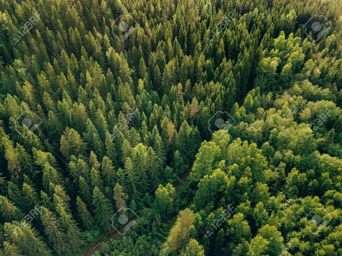 Aerial Top View Of Summer Green Trees And Road In Forest Rural Finland Drone