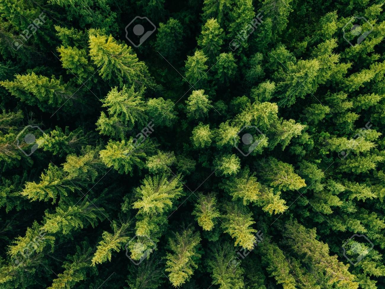 Aerial Top View Of Summer Green Trees In Forest Rural Finland Drone Photography Stock