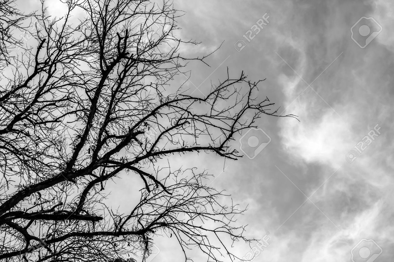 Black and white scenery of dry tree with sky stock photo 41622275