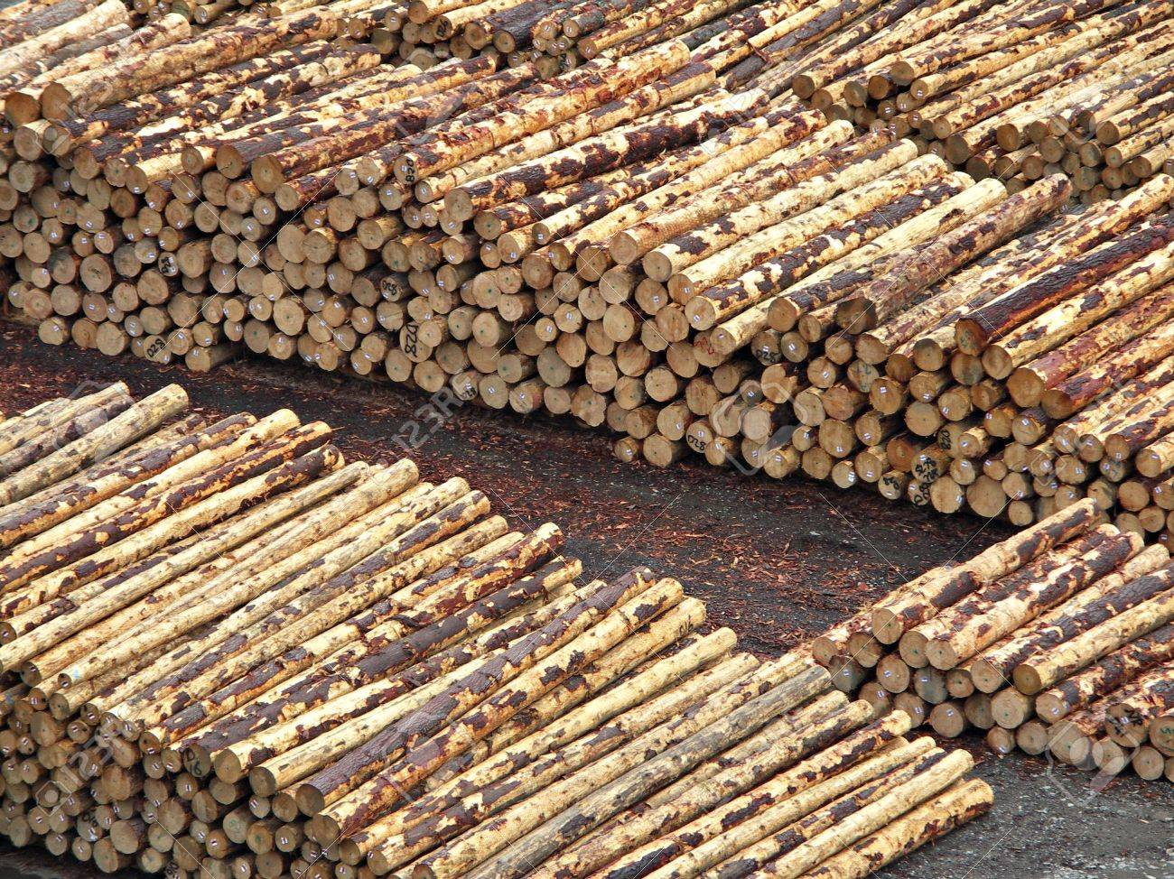 Stacked Logs Stock Photo - 871782