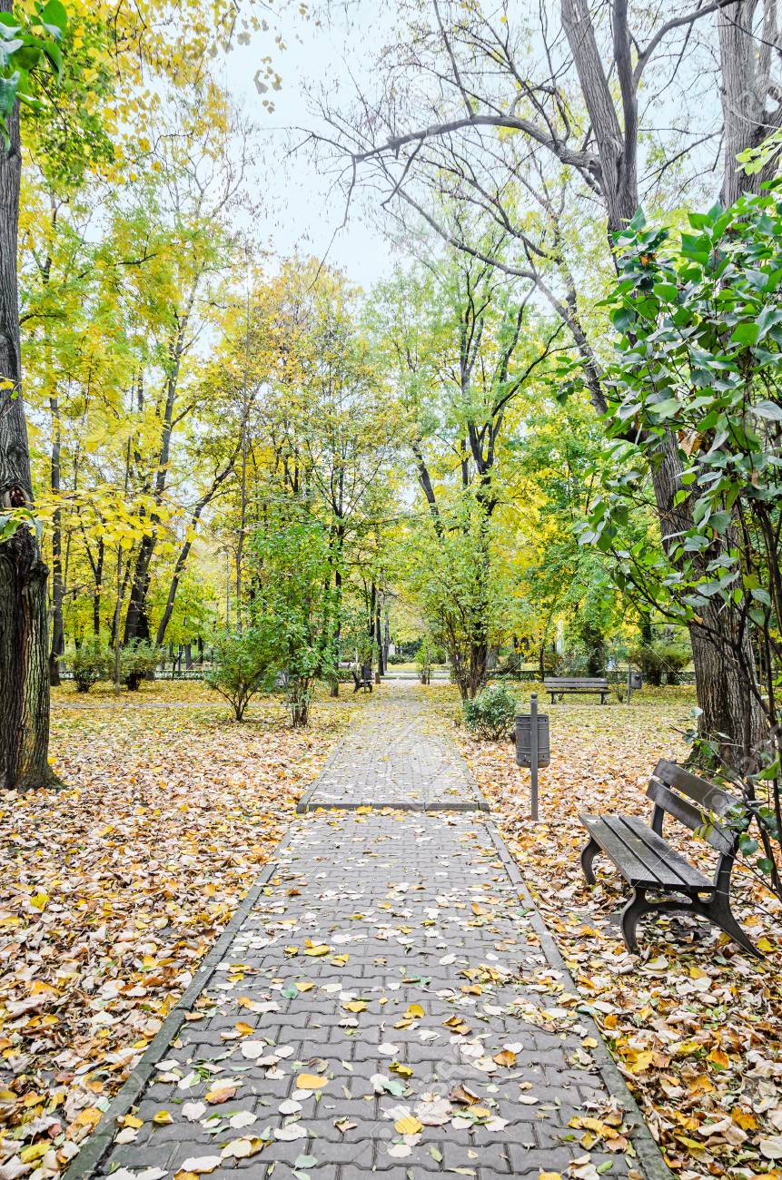 Autumn Time In Outdoor Park With Colored Yellow Orange Trees ...