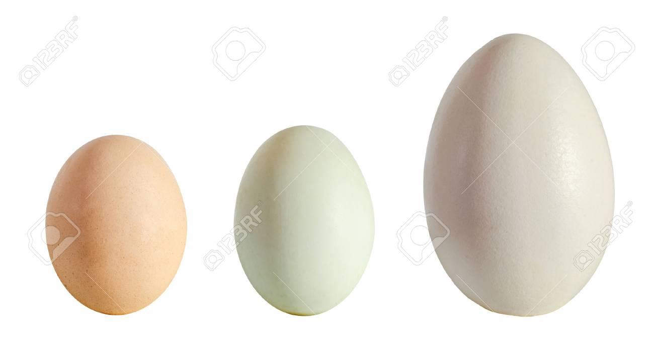 Colección De Huevos, Huevo De Ganso Blanco Grande, Huevo De Pato ...