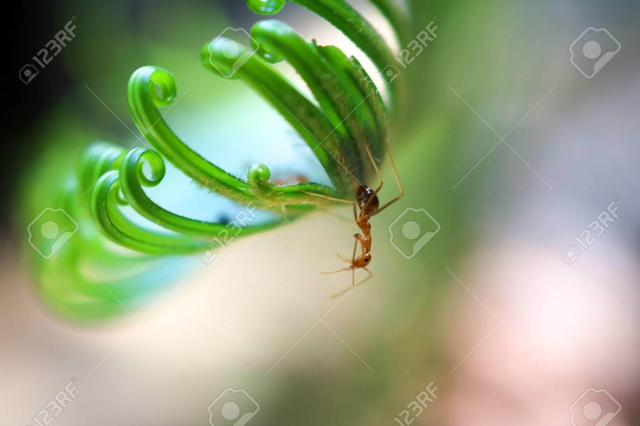 Hojas Hermosas Del Verde De Cycad Con Las Hormigas En El Jardín ...