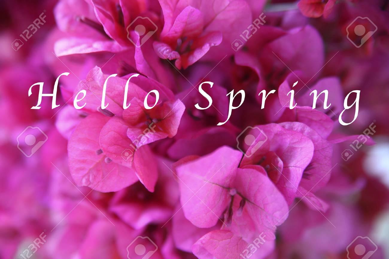 gros plan de bougainvillier rose foncé avec les mots hello spring en