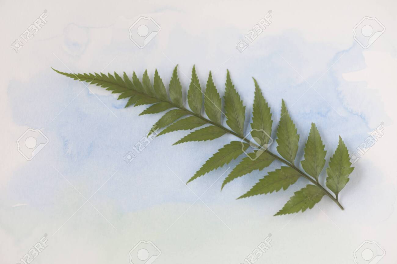 Single frond of a fern plant on pale blue watercolor - 141338592