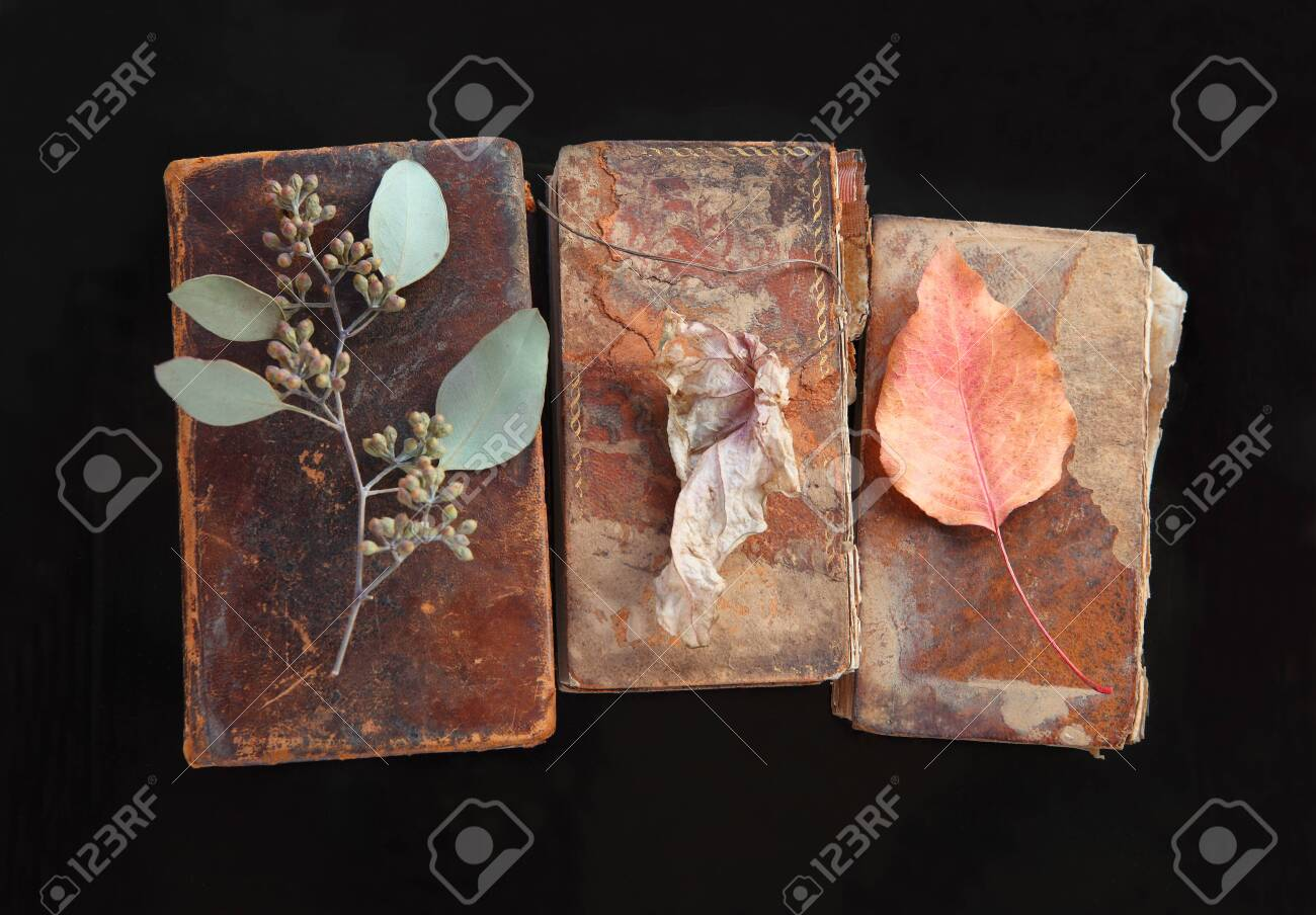 Old, damaged old books with eucalyptus and autumn leaves - 141338651