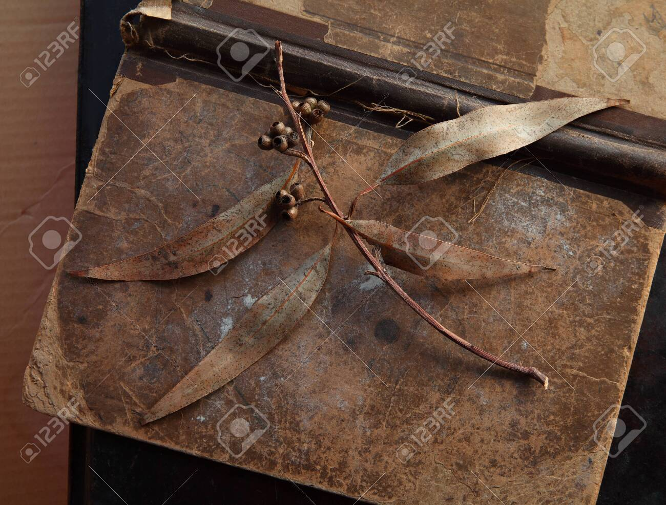 Eucalyptus leaves with seed pods on an old, damaged book - 141340191