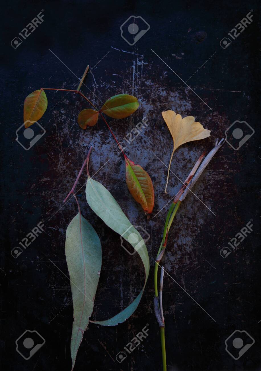 Eucalyptus, ginkgo and nankin leaves with fortnightly lily stalk - 141339192