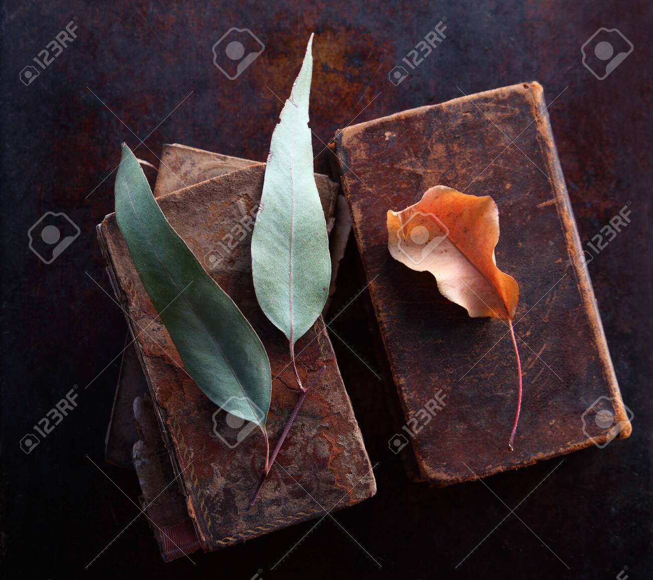 Pastel-colored leaves on old, well-used books with copy space - 141340231