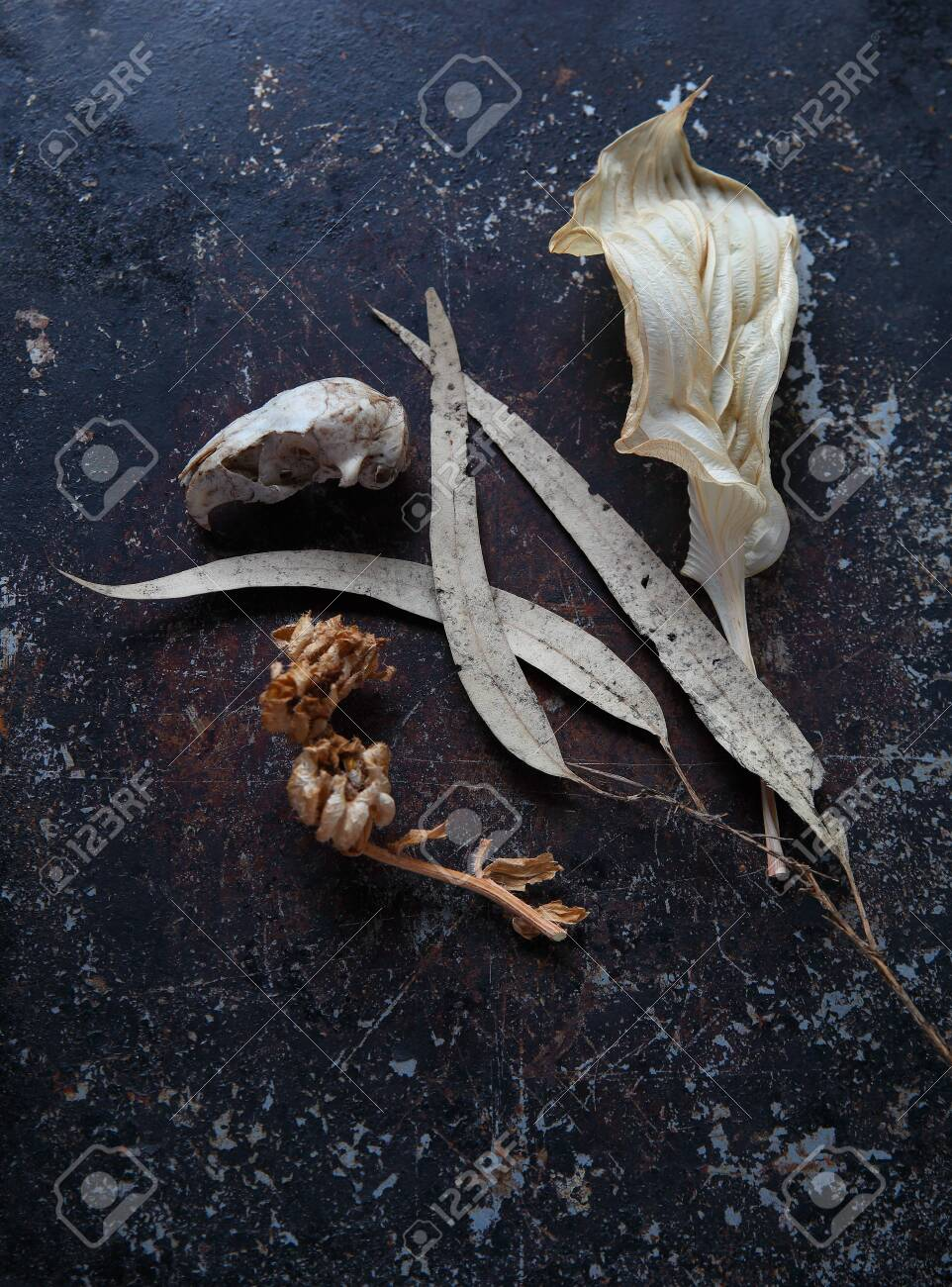 Overhead view of dead leaves, small animal skull and seed pods on a textured metal surface with copy space - 141338761