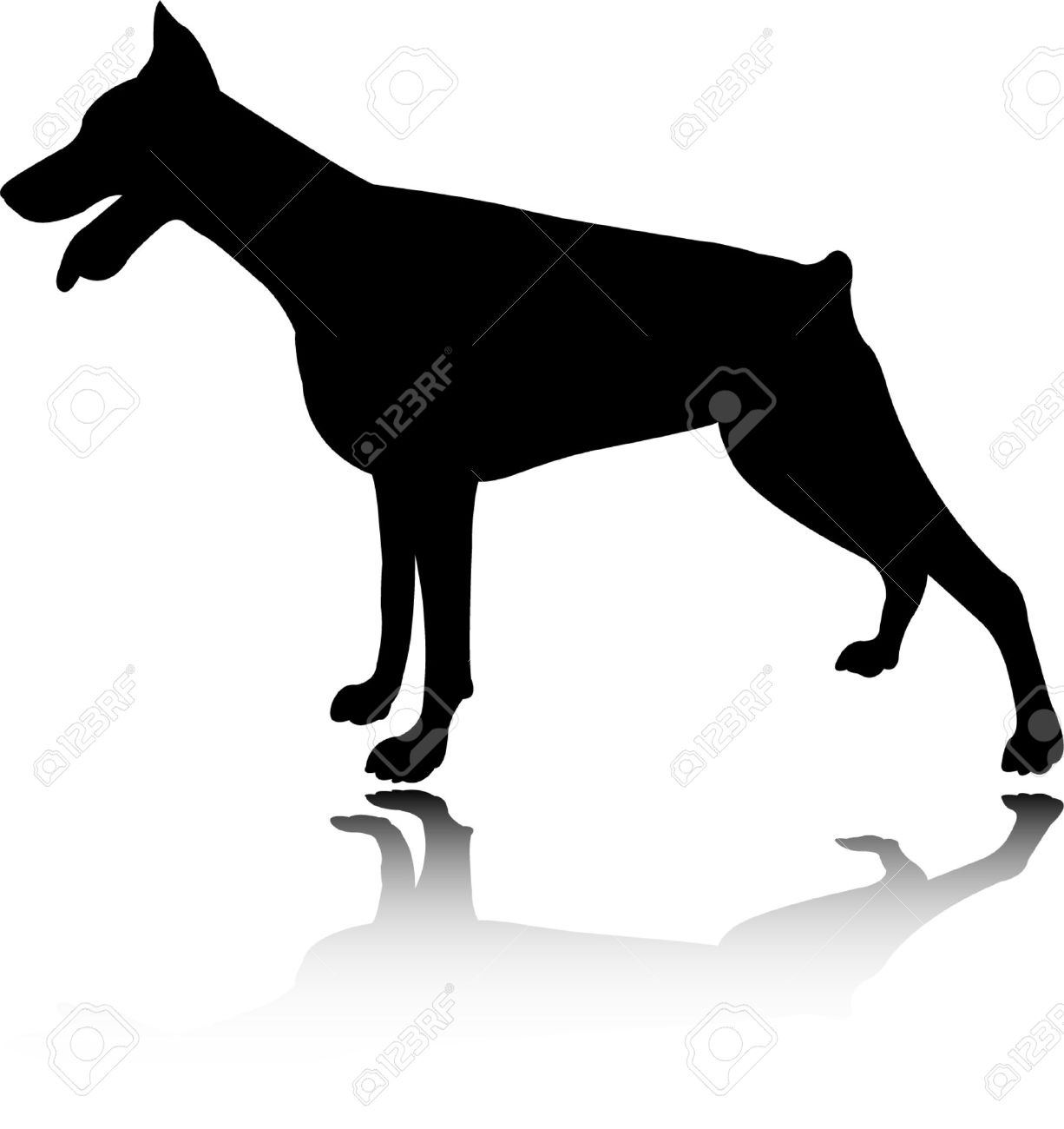 doberman vector stock vector 5061356
