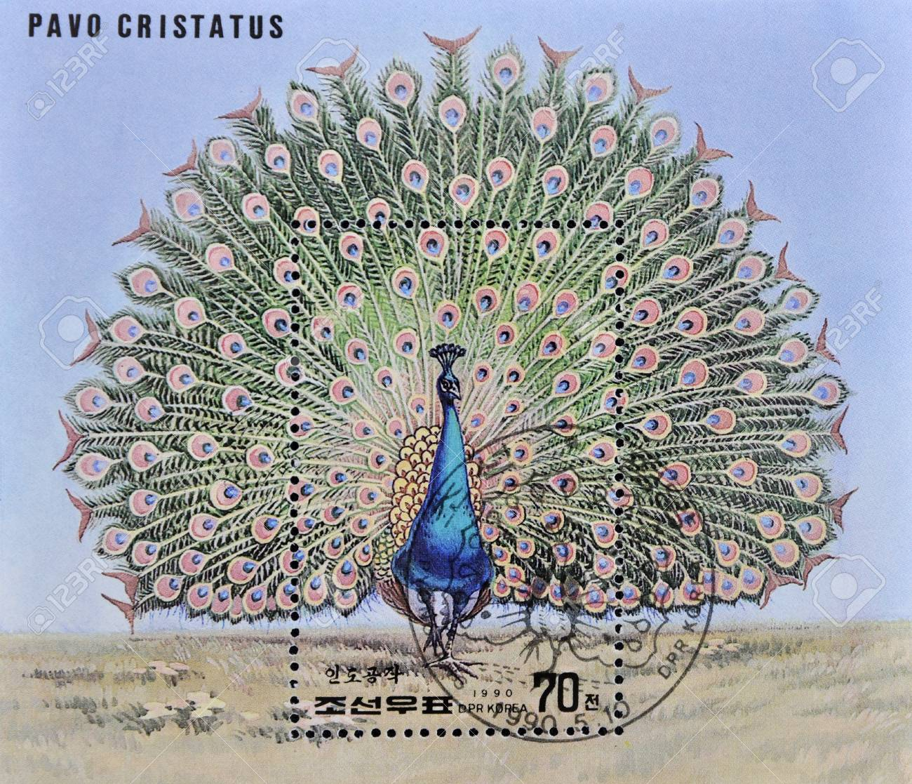 NORTH KOREA - CIRCA 1990: A stamp printed in DPR Korea shows a pavo cristatus, circa 1990 Stock Photo - 10741430
