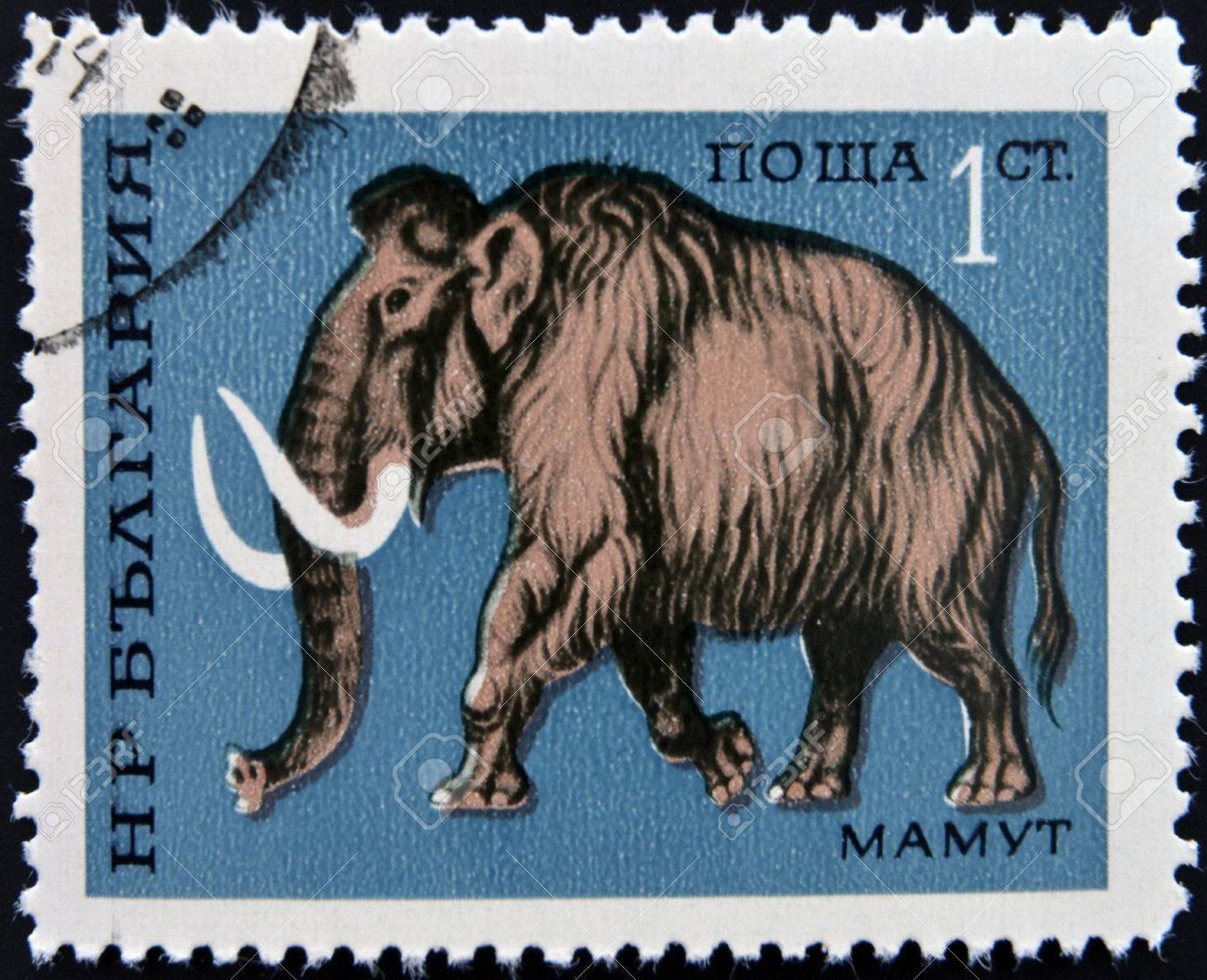 BULGARIA - CIRCA 1971  a stamp printed by BULGARIA shows mammoth, circa 1971 Stock Photo - 13026369