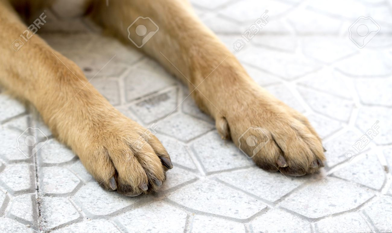 Picture Of A German Shepherd Dog, Paws On A Pavement Stock Photo ...