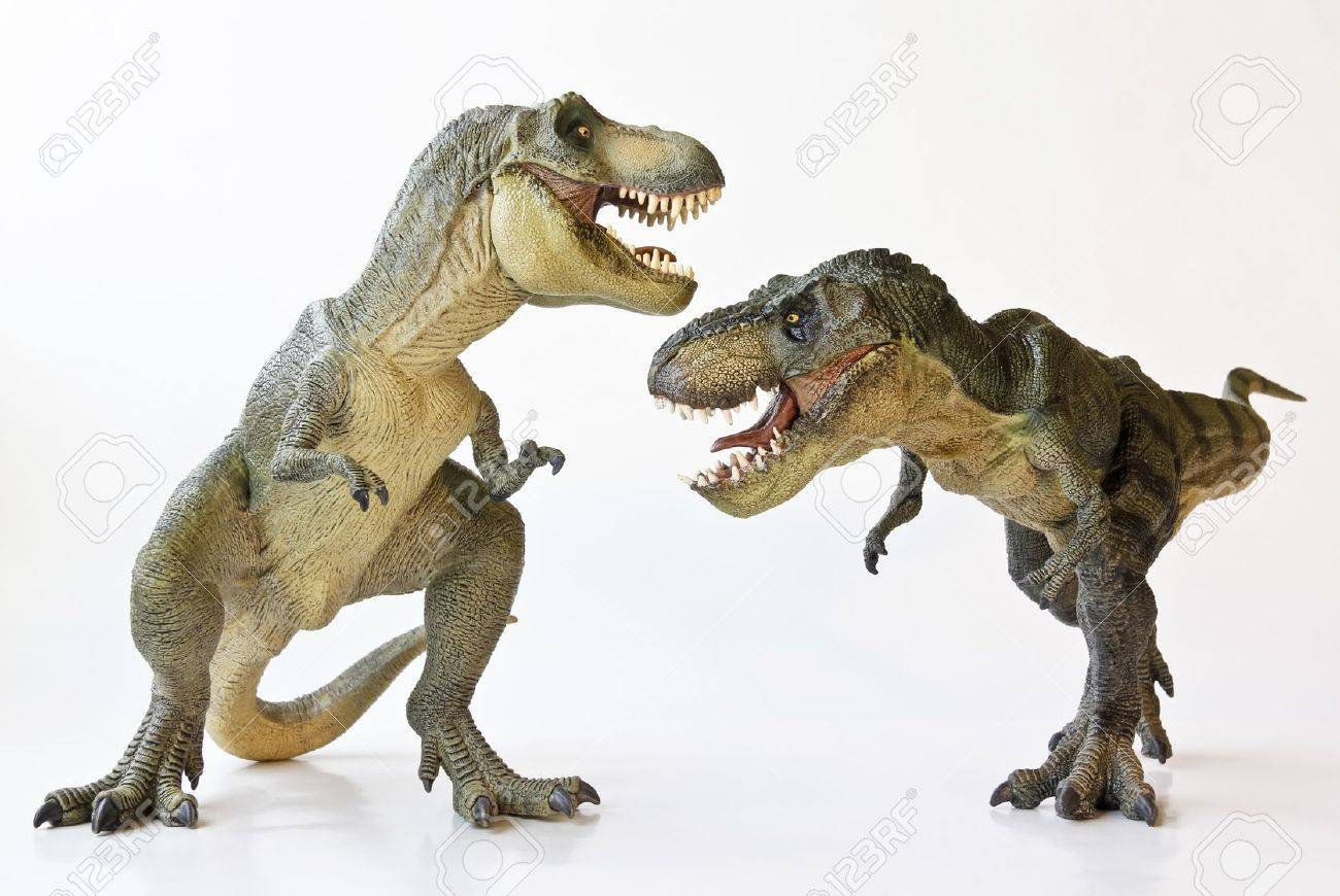 A Tyrannosaurus Rex Pair Face Off Against a White Background - 17588906