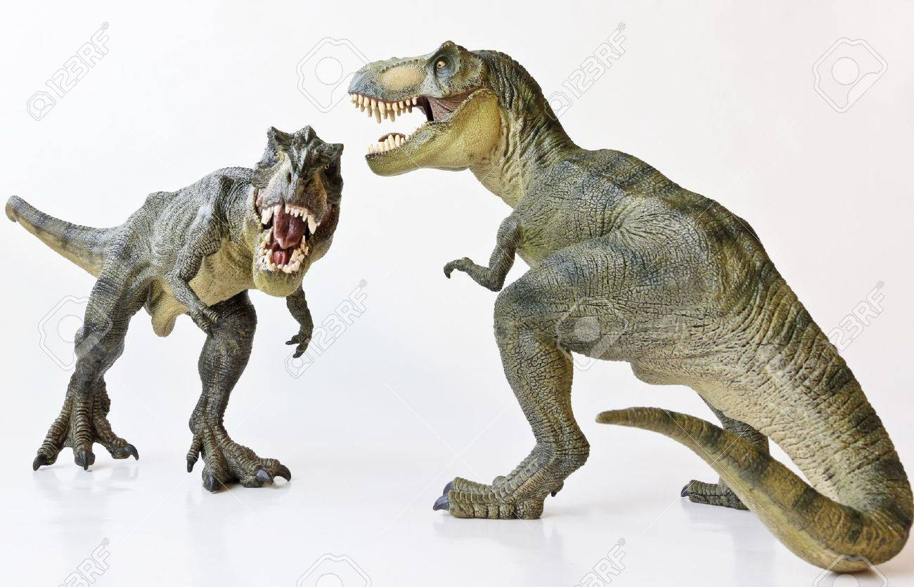 A Tyrannosaurus Rex Pair Face Off Against a White Background - 17588907