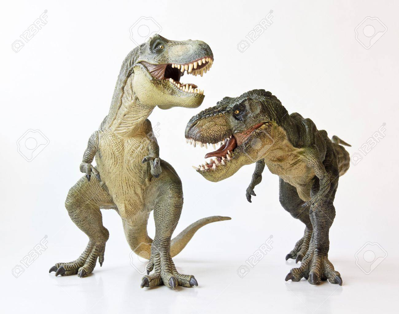 A Tyrannosaurus Rex Pair Face Off Against a White Background - 17588904