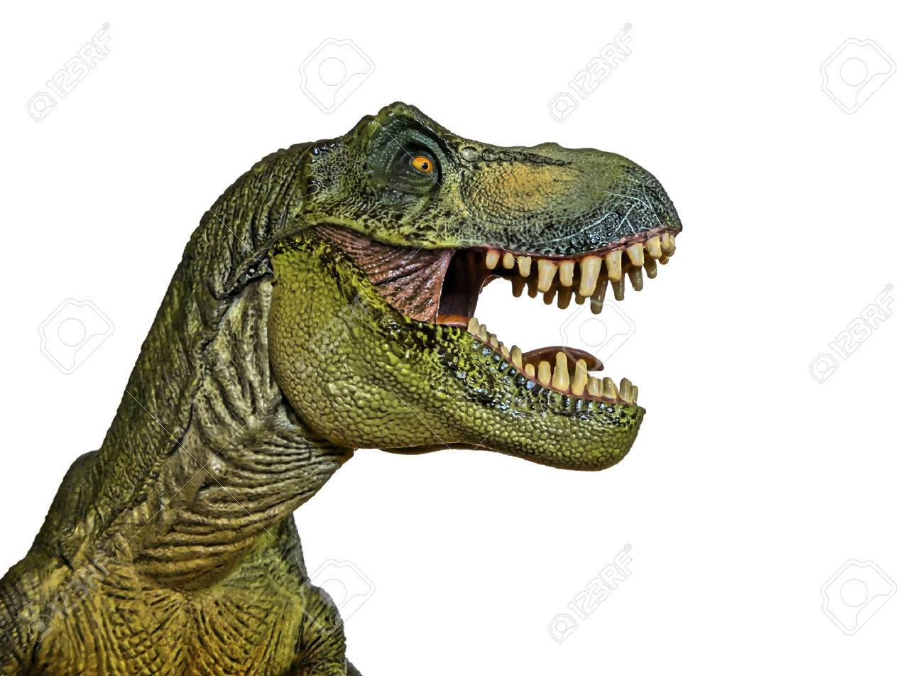 A Tyrannosaurus Rex Hunts Against a White Background - 30422659