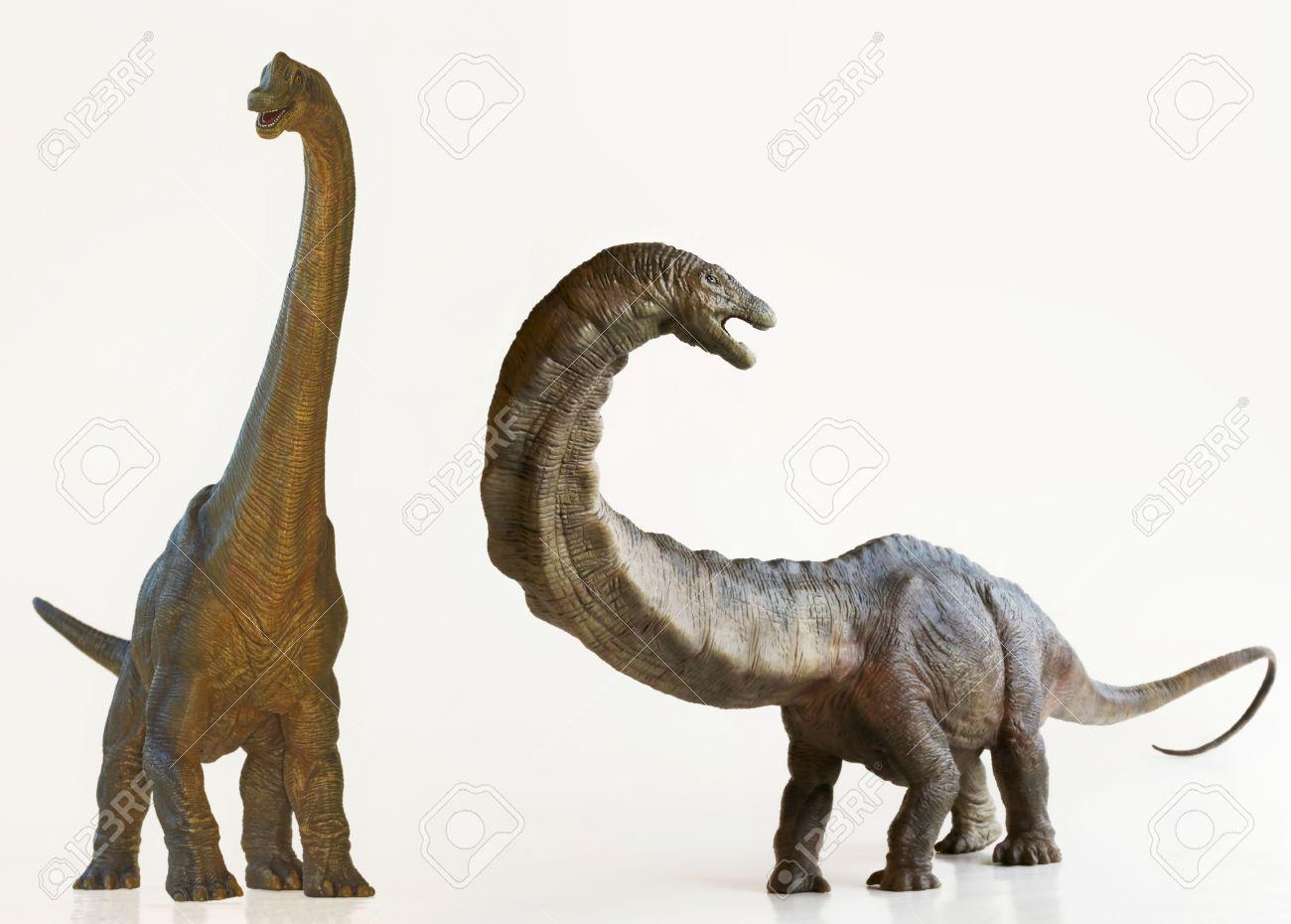 a brachiosaurus dinosaur next to an apatosaurus both are sauropods