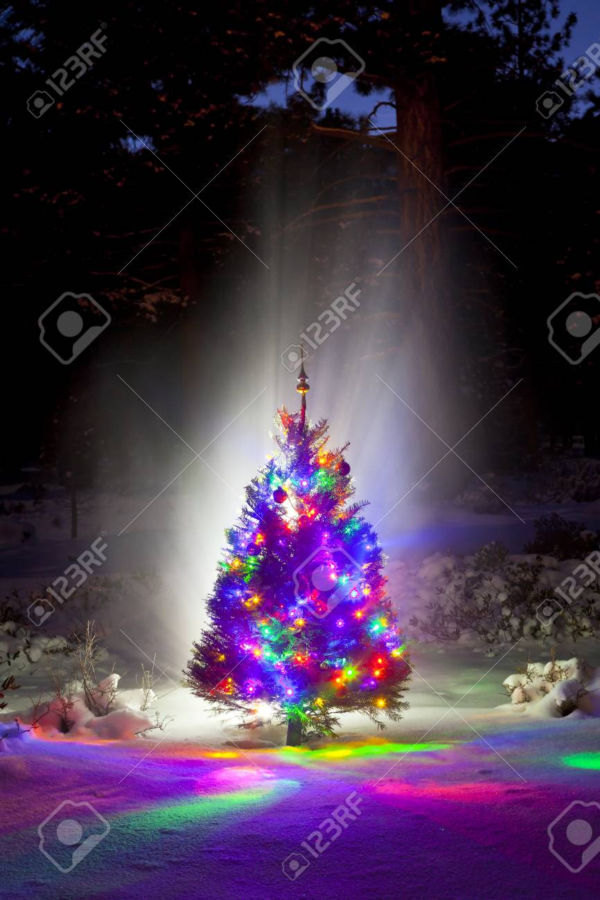 Christmas Tree In The Woods At Night With Snow Stock Photo Picture
