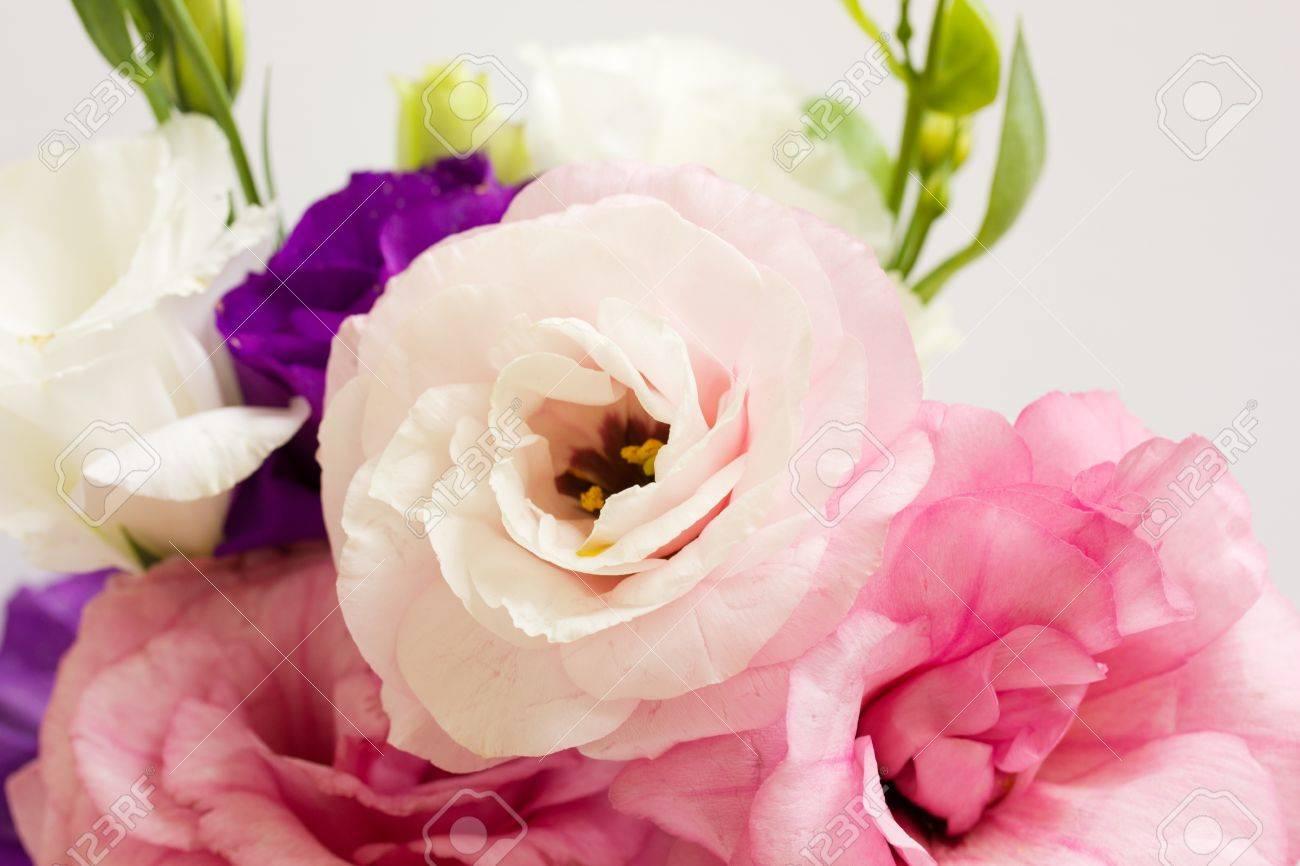 Banch of eustoma flowers isolated on white background Stock Photo - 11259187