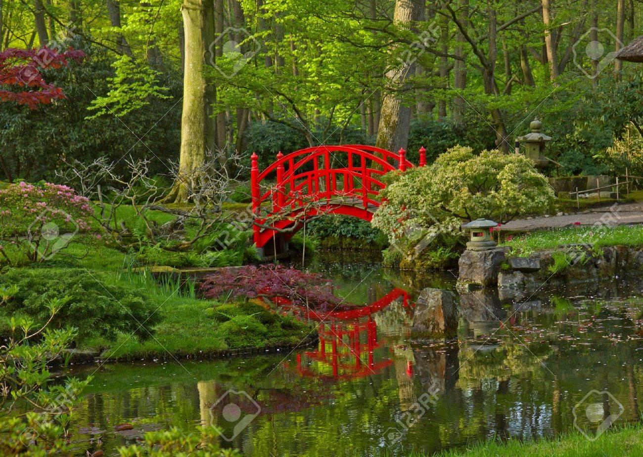 japanese garden with red bridge den haag holland stock photo 13625193