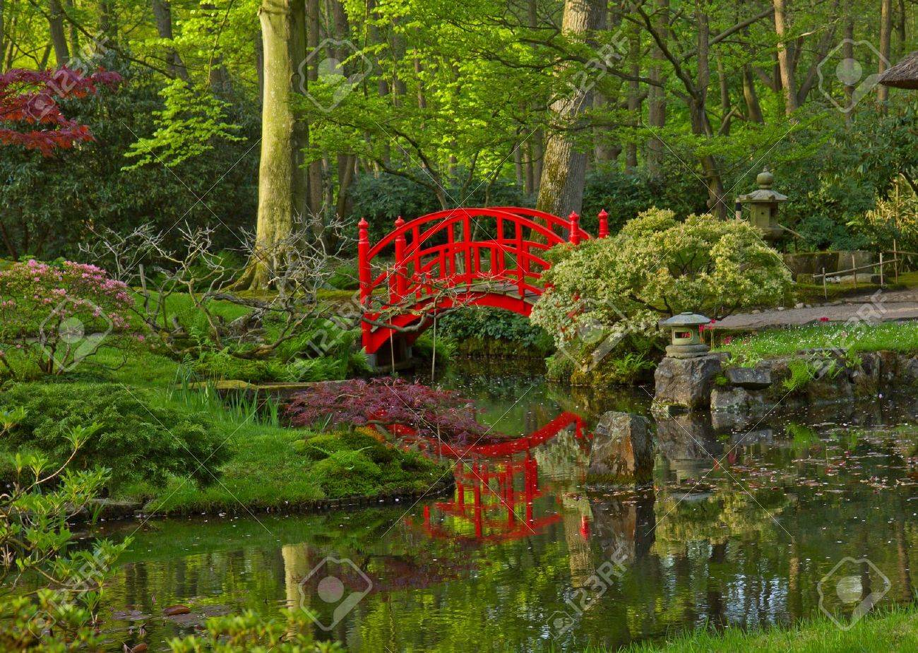 japanese garden with red bridge den haag holland stock photo 13625193 - Red Japanese Garden Bridge