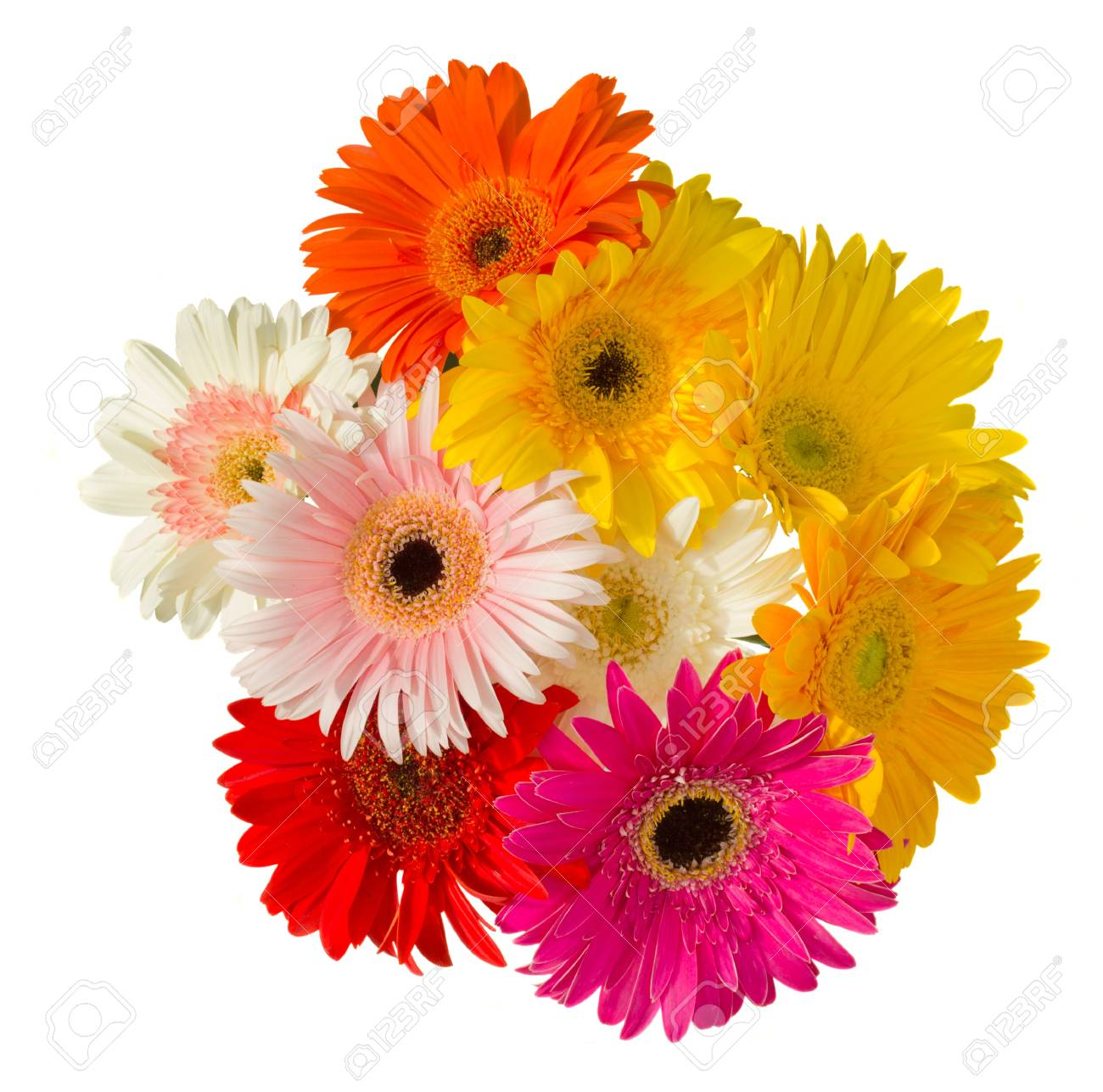 bouquet of gerber flowers isolated on white background Stock Photo - 14788565
