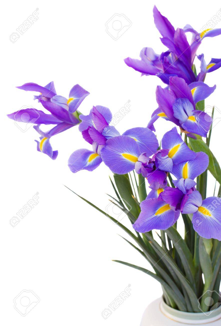 Bouquet of irises flowers stock photo picture and royalty free bouquet of irises flowers stock photo 17437919 izmirmasajfo Image collections