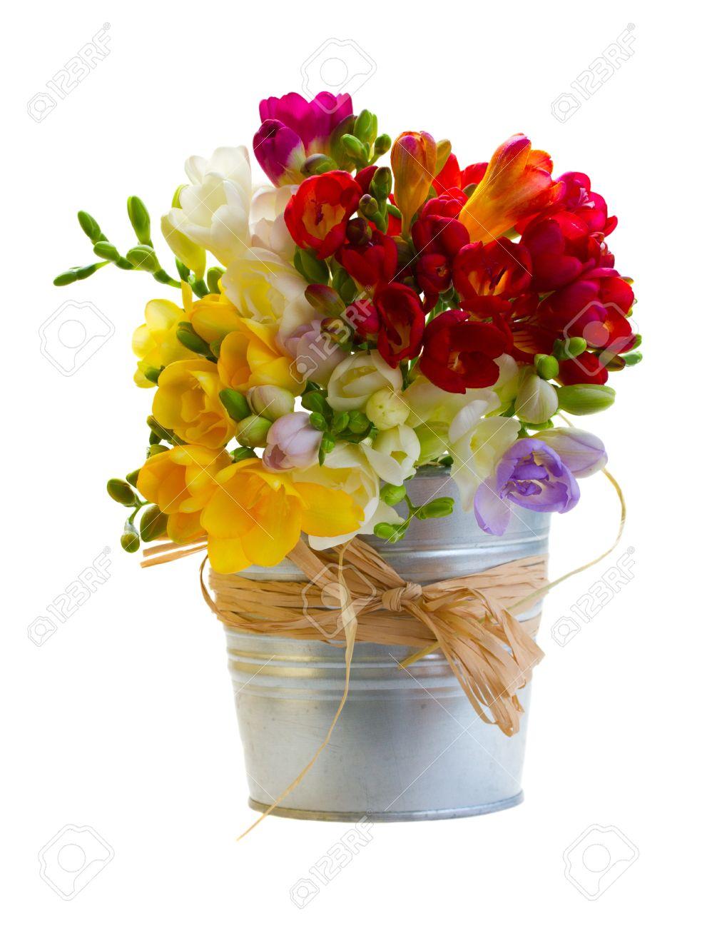 Beliebt Bevorzugt Bouquet Von Freesien Blumen In Metall-Topf Auf Weißem Hintergrund @VS_76