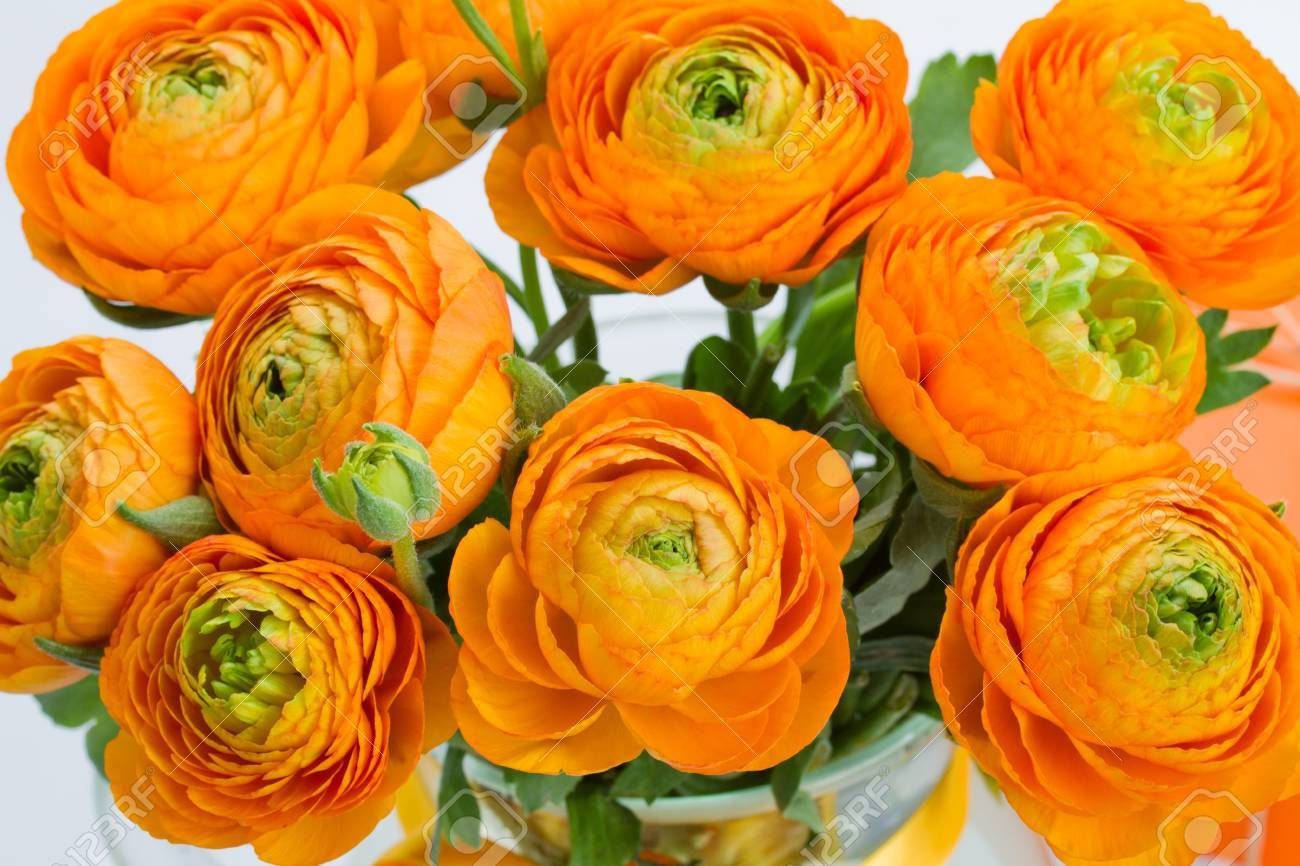 Ranunculus Orange Flowers Bouquet Close Up Stock Photo Picture And Royalty Free Image Image 19668050