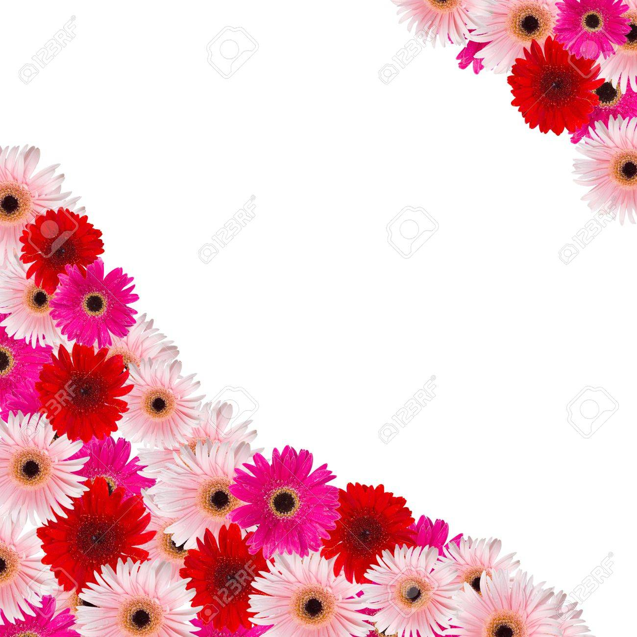 Pink and red herbera flowers border isolated on white background pink and red herbera flowers border isolated on white background stock photo 21179160 mightylinksfo Choice Image