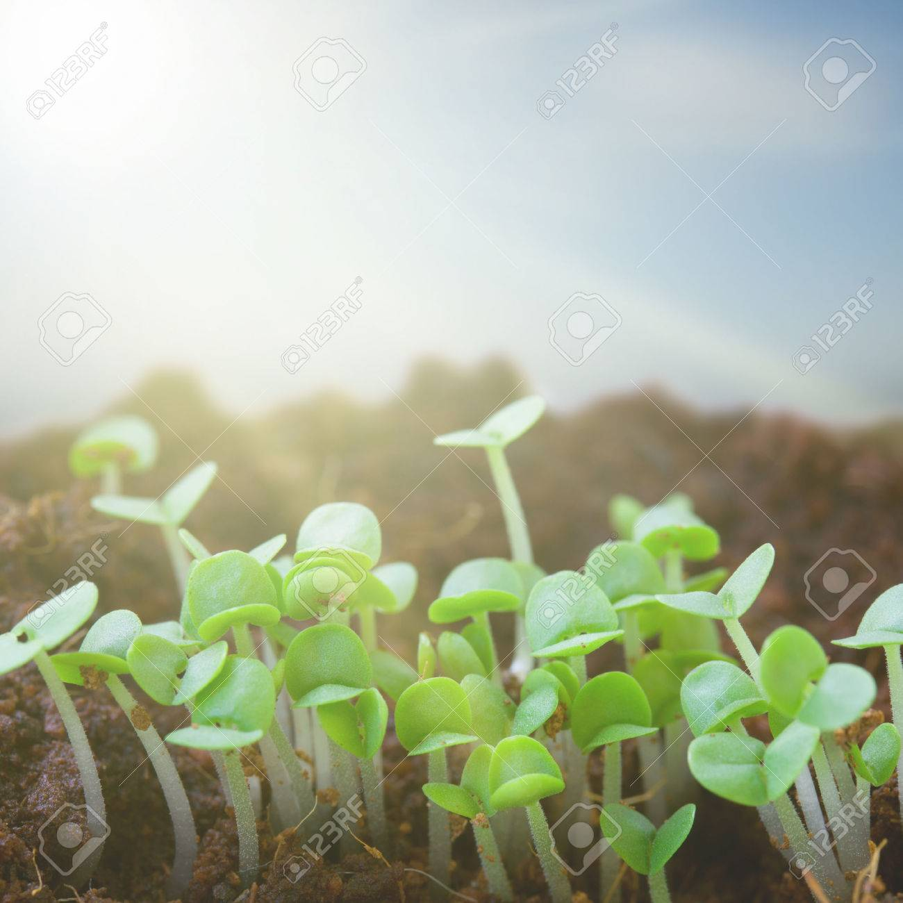 New Beginning Spring Sprouts In Black Soil Under The Sun Stock Photo