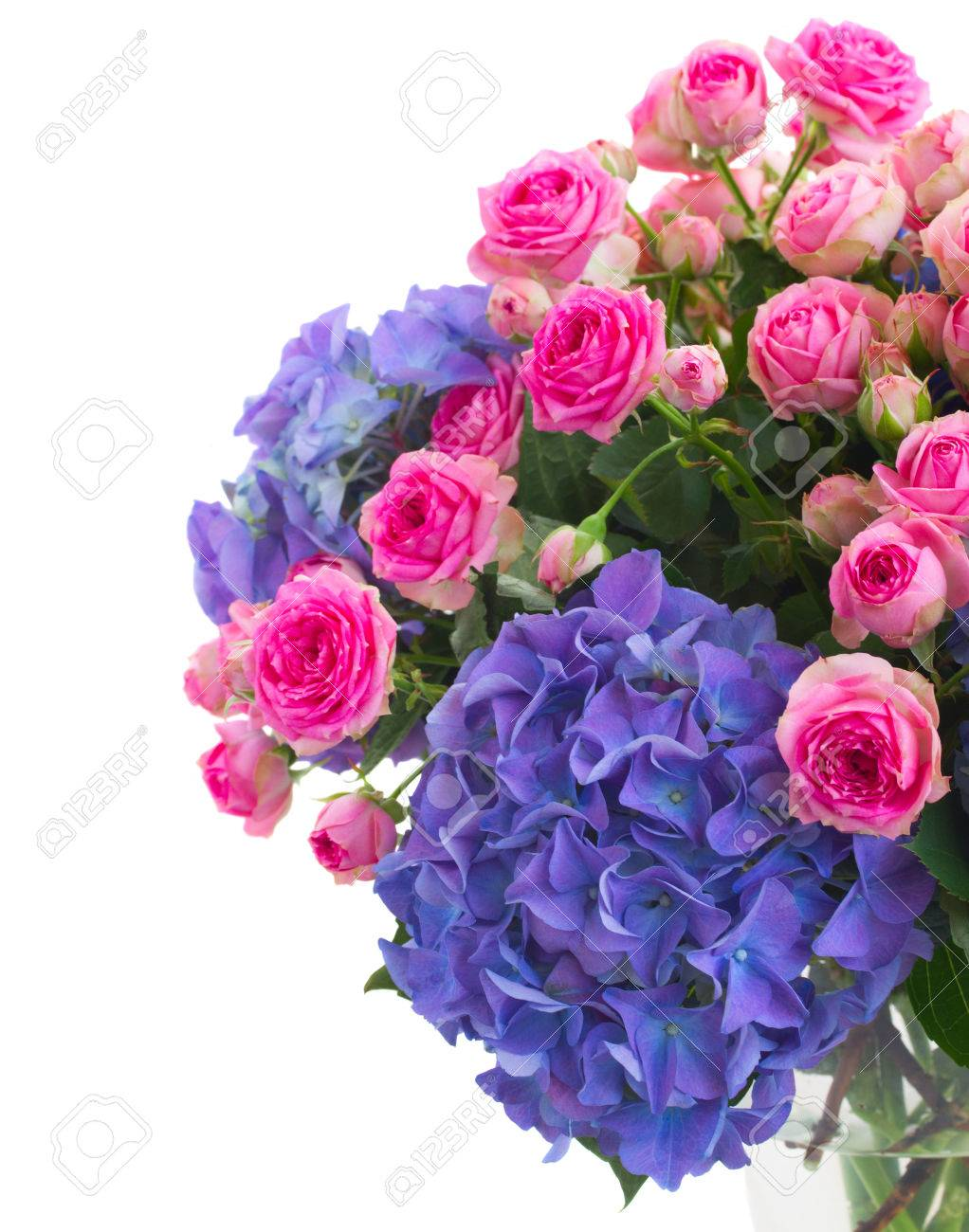 Bunch Of Pink Roses And Blue Hortenzia Flowers Close Up Isolated