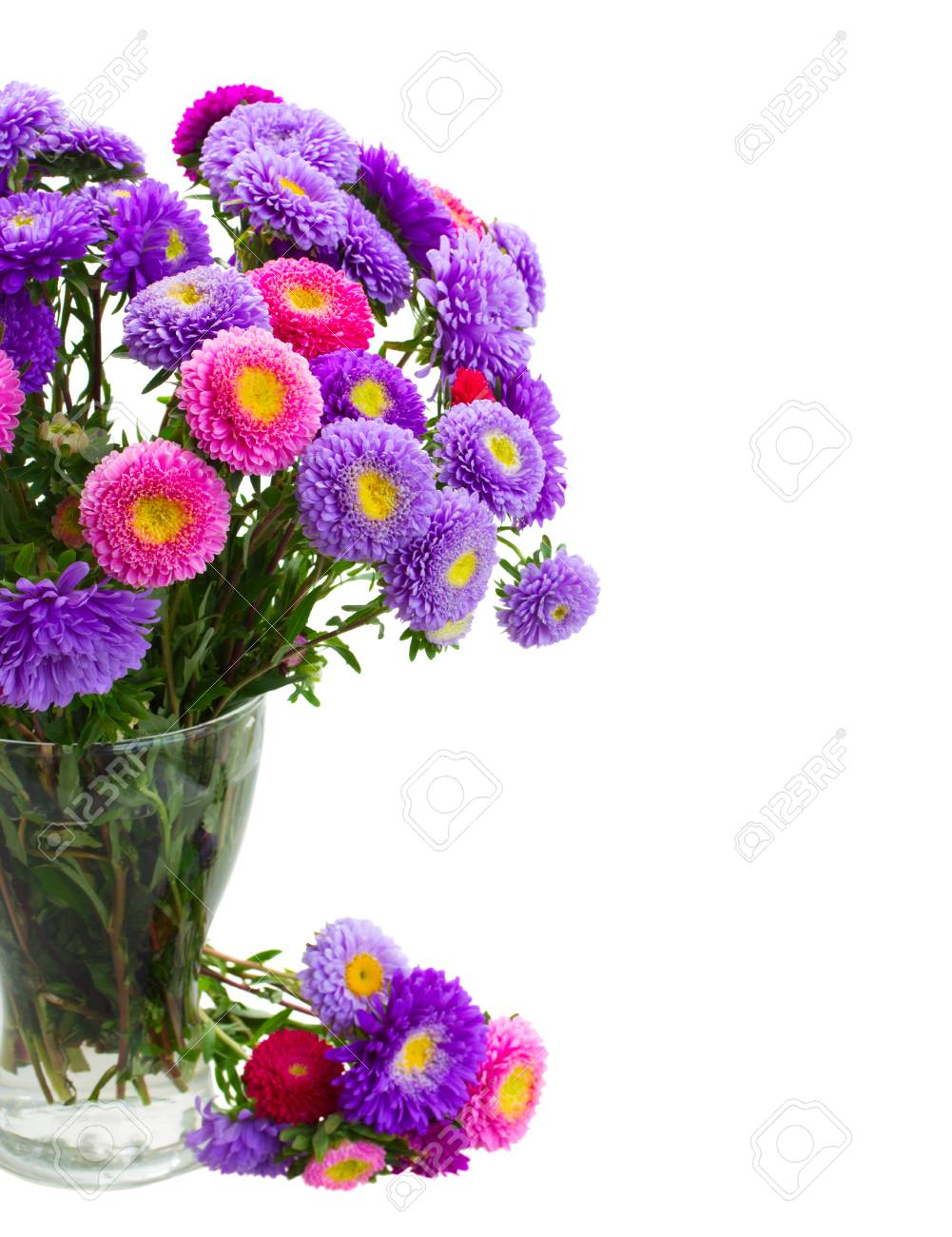 Fresh Aster Flowers Bouquet In Vase Close Up Isolated On White