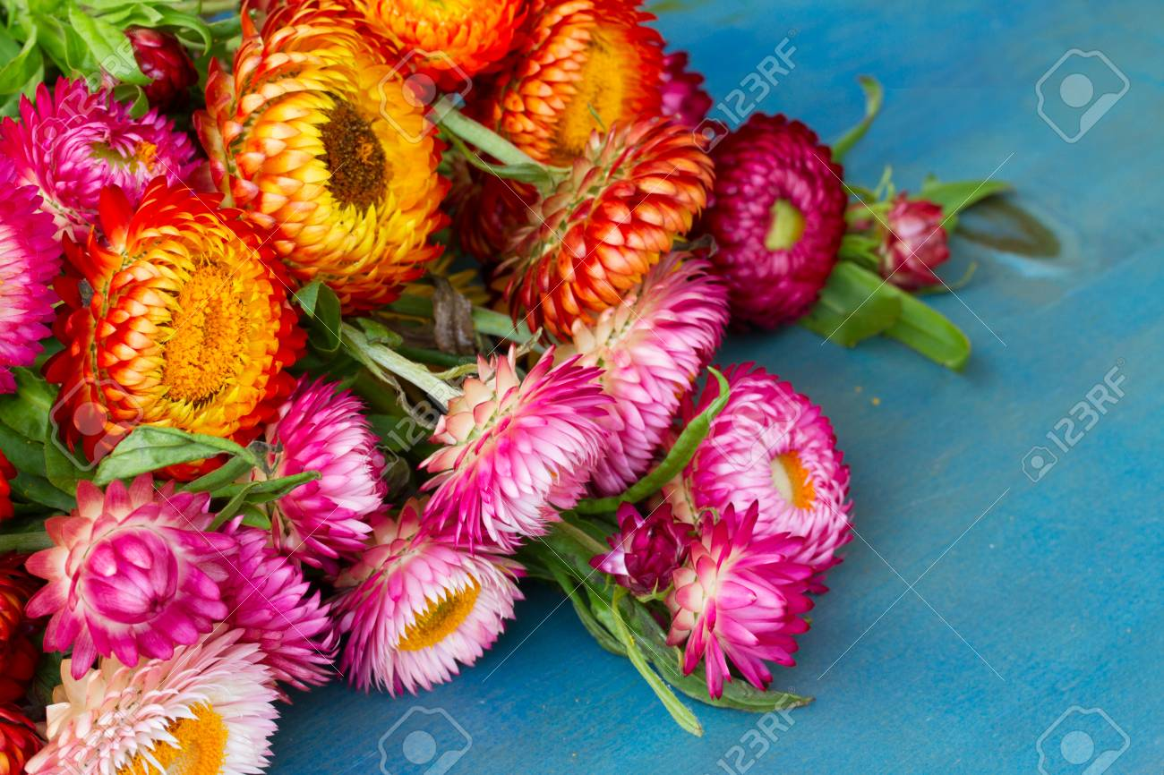 Bouquet of everlasting flowers bouquet on blue table stock photo bouquet of everlasting flowers bouquet on blue table stock photo 29654779 izmirmasajfo