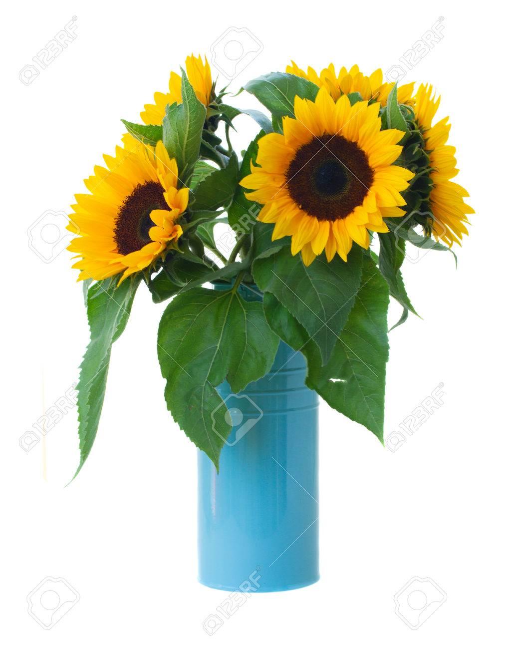 fleurs de tournesol bouquet dans un pot bleu isolé sur fond blanc