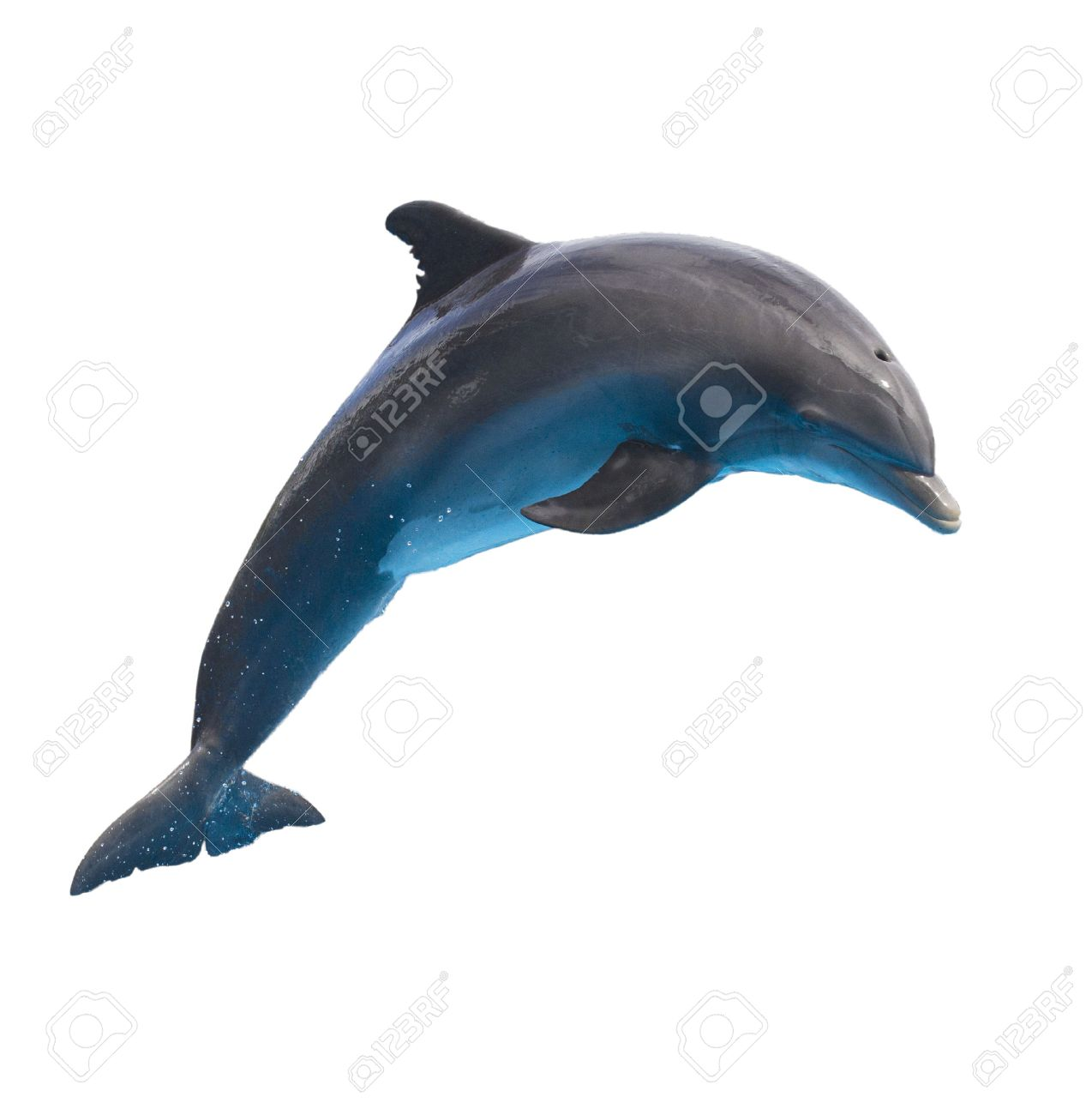 dolphin images u0026 stock pictures royalty free dolphin photos and