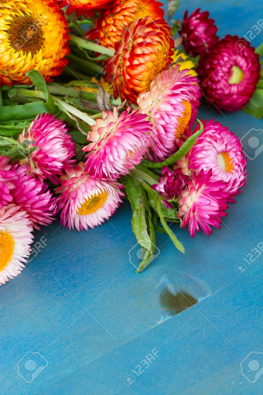 Bouquet of everlasting flowers bouquet on blue table stock photo bouquet of everlasting flowers bouquet on blue table stock photo 30521343 izmirmasajfo